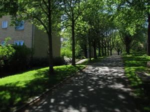 promenadvag